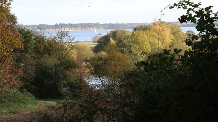 Looking through the trees at the National Trust area at Pin Mill Picture: MICK WEBB/IWITNESS
