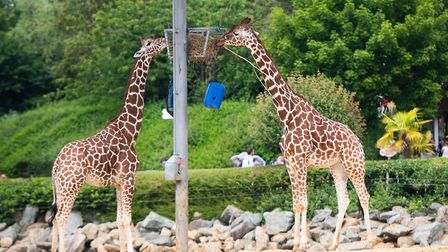 Colchester Zoo believes the effects of the second Covid-19 lockdown 'may prove too much'. Picture: S