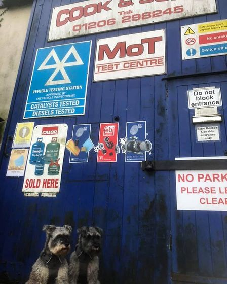 Mr Noodles and his best friend Wilfred at door number six - Cook & Sons Garage. Picture: GRAHAM REED