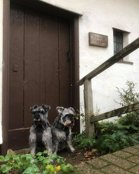 Mr Noodles and his best friend Wilfred at door number five - Bridge Cottage in East Bergholt. Picture: GRAHAM REED
