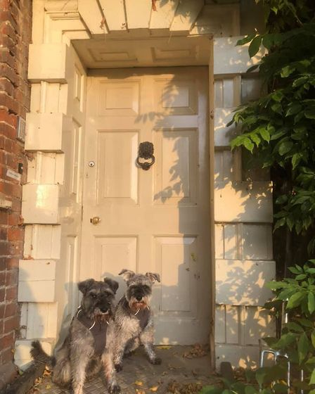 The third door of the dogs' 30 day lockdown doorstep tour. Picture: GRAHAM REED