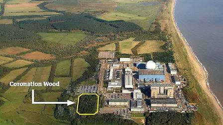 EDF has revealed how it would compensate for the loss of a historic woodland Picture: MIKE PAGE AERI
