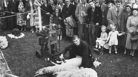 Tom Scott sheep shearing at the Royal Norfolk Show back in 1954 Picture: ARCHANT