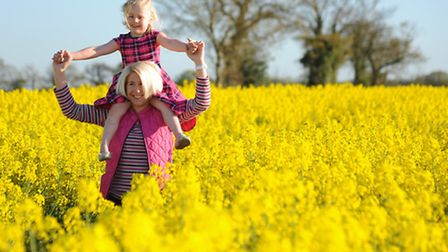 Angela Sharpe and her daughter, Jessie, 4, enjoying an oilseed rape field in the sunshine. Picture: