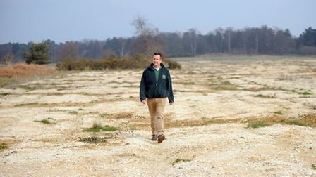 Andy Palles-Clark is spearheading a project to turn areas of Thetford forest back to heathland.