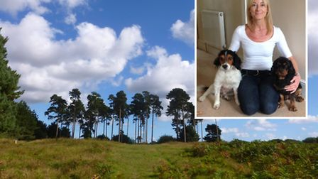 Inset, Caroline Peters with her dogs Sparkie (left) and Ruby. The beloved family pets became ill after walking in...