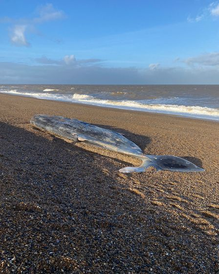 A dead sperm whale has washed up on the beach near Weybourne.