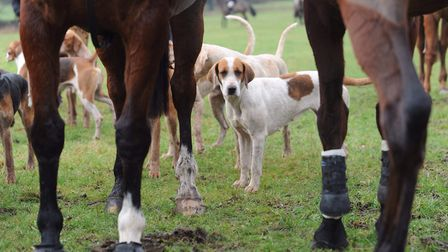 The National Trust and Forestry England have suspended licences for trail hunting on their land Picture: ARCHANT