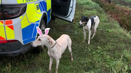 Police in Fenland seized two vehicles, two dogs, issued six community protection notices, six dispersal orders and...