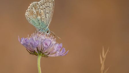Ely Photographic Club held its first photographic competition via Zoom. 3rd: Chalkhill Blue Butterfly by Kevin Pigney