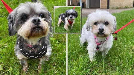 Could you rehome Honey, Candy and Buddy for their twilight years? Picture: RSPCA Block Fen Animal Centre