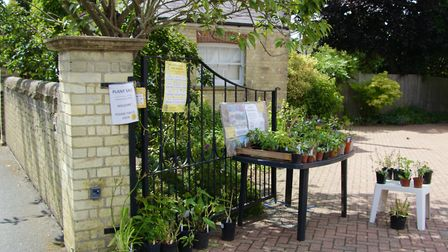 The amazing gardens in Chapel Street, Ely, which a couple have opened regularly to aid the National Gardens...