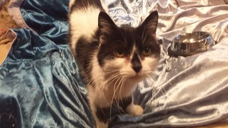 Ann Carden saw her cat Bobo (pictured) disappear while retrieving her friend's cat on Hospital Road, Doddington before...