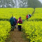 Ramblers enjoying the Suffolk countryside, prior to lockdown Picture: Mal Hurrell/Archant Archives