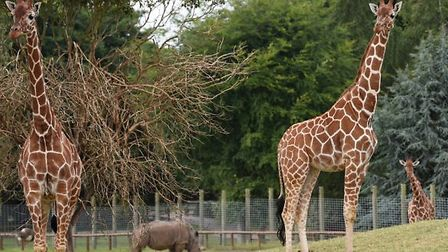 Africa Alive! is looking for an apprentice animal keeper Picture: NICK BUTCHER