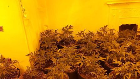 Witnesses are being sought as part of investigations into a cannabis factory in Clacton with plants worth around £1m...