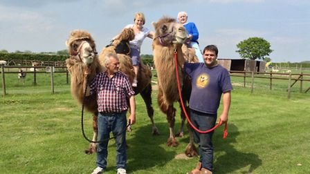 Dawn Allen of Great Yarrmouth takes a trip on a camel for her 87th birthday.