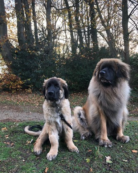 Hank the dog, with his older brother Howie