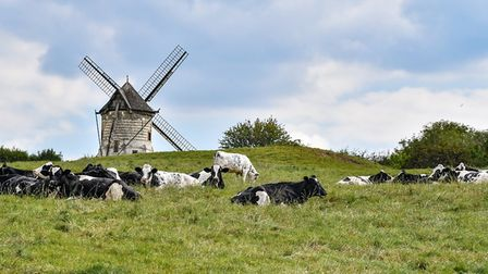 A countryside scene of a windmill with black and white cows resting in front of it