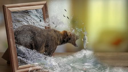 In a manipulated image a bear bursts out of a picture frame to catch a salmon