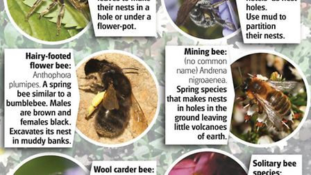Types of bees in Norfolk gardens. Source and pictures: Nick Owens