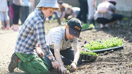 Burnham Market Primary School pupils planting new plants in the walled gardens at Holkham Hall. Pict