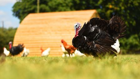 Tougher measures have been introduced from today to prevent the spread of avian flu. Picture: Ian Burt