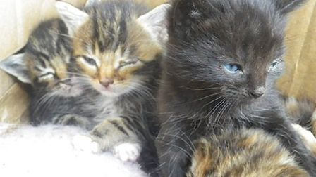 Some of the kittens which were dumped in a field.