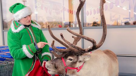 On Saturday, Jack's Supermarket in Chatteris hosted real reindeers in their car park as a special surprise for customers...