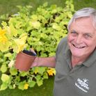 Keith Gilbert is growing a large number of pumpkins for the Watton Carnival. Picture: Ian Burt