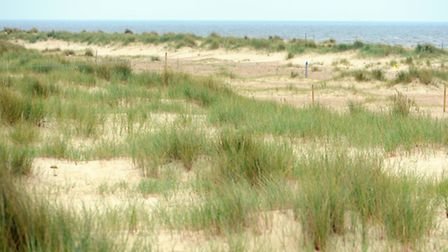 The area where the Little Tern colony is on the beach at Winterton. Picture: James Bass
