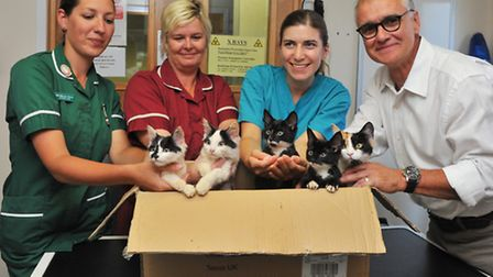 The mother cat and her four kittens that were dumped in a sealed cardboard box in the blazing sunshi