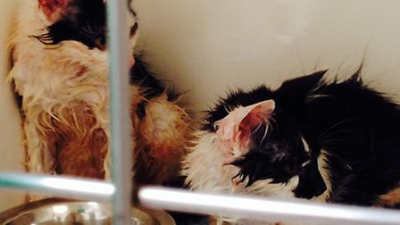 A mother cat and her four kittens that were dumped in a sealed cardboard box in the blazing sunshine