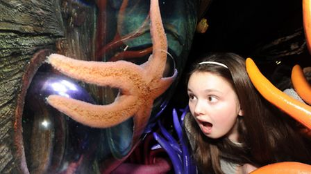 Take the family to the Sealife Centre at Great Yarmouth this summer holiday.