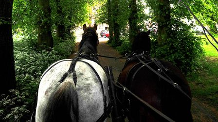 Two horses pull a coach along a tree lined road
