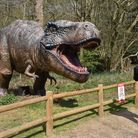 The dinosaurs are a big attraction at Roarr! Dinosaur Adventure. Pic: Sonya Duncan Copyright: Arch