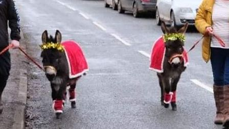 Two donkeys being walked through the town