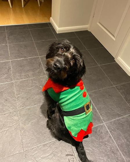 Willow the cockerdor is ready to help Santa