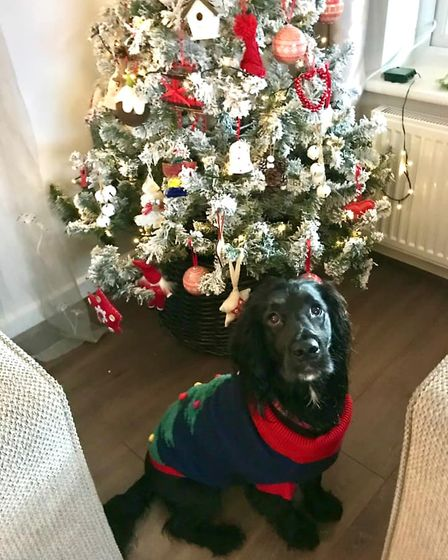 Bailey, 1, is sporting a very festive jumper