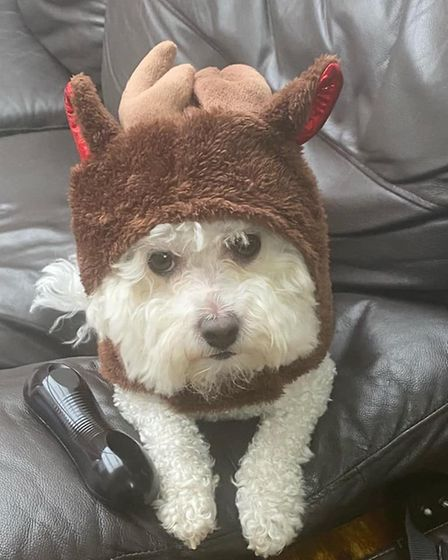 Louie is all wrapped up as a cuddly reindeer