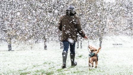 Craig Robinson and Dudley enjoying the snow in Christchurch Park, Ipswich