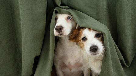 Advice for dog owners ahead of NYE fireworks