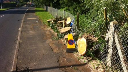Motorists in Costessey faced distruption this morning after a tree fell in the road. Picture: STAFF.