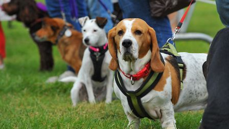 Mad About Dogs and Garden Show at The Royal Norfolk Showground. Photo: Steve Adams