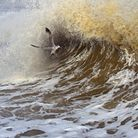 The gull picture by wildlife photographer Ernie Janes from Gimingham which won him second place in a