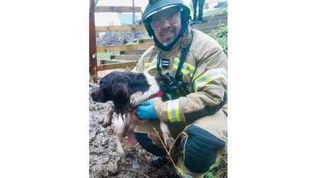 Barney the spaniel with firefighter Lee Bacon