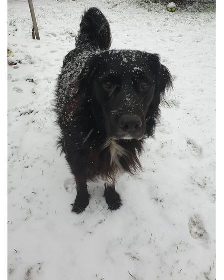 A dog in the snow in Stowmarket