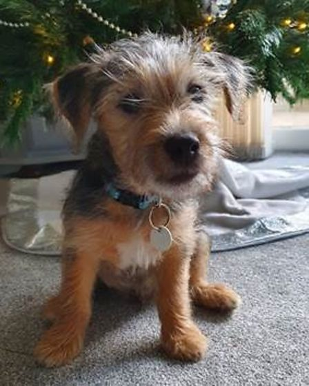Dog rehomed thanks to Wood Green
