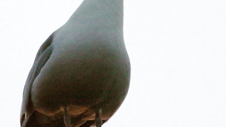 The RSPCA is appealing for information after a seagull was fatally injured in a deliberate attack in
