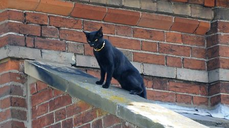 Cat stuck on a roof in Park Road, Cromer.Picture: ANTONY KELLY